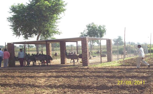 shaturmurg-farm