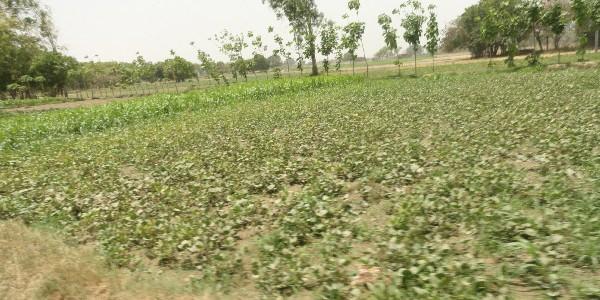 गाँव में रबी, खरीफ व धन देने वाली फसल का उत्पादन होता है। देश में हरित क्रांति में जब से बिजली का आगमन हुआ तो किसानों के साथ खेती से […]