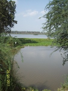 BHINDAWAS LAKE-2