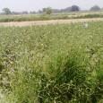 गाँव वालों के पास खेती करने के लिए पर्याप्त खेती है जिसमें वे लोग अपनी सुविधा के अनुसार फसल लगाते है खेतों में धान, गेंहूँ, मक्का, बाजरा, जौ, मटर, चना, […]